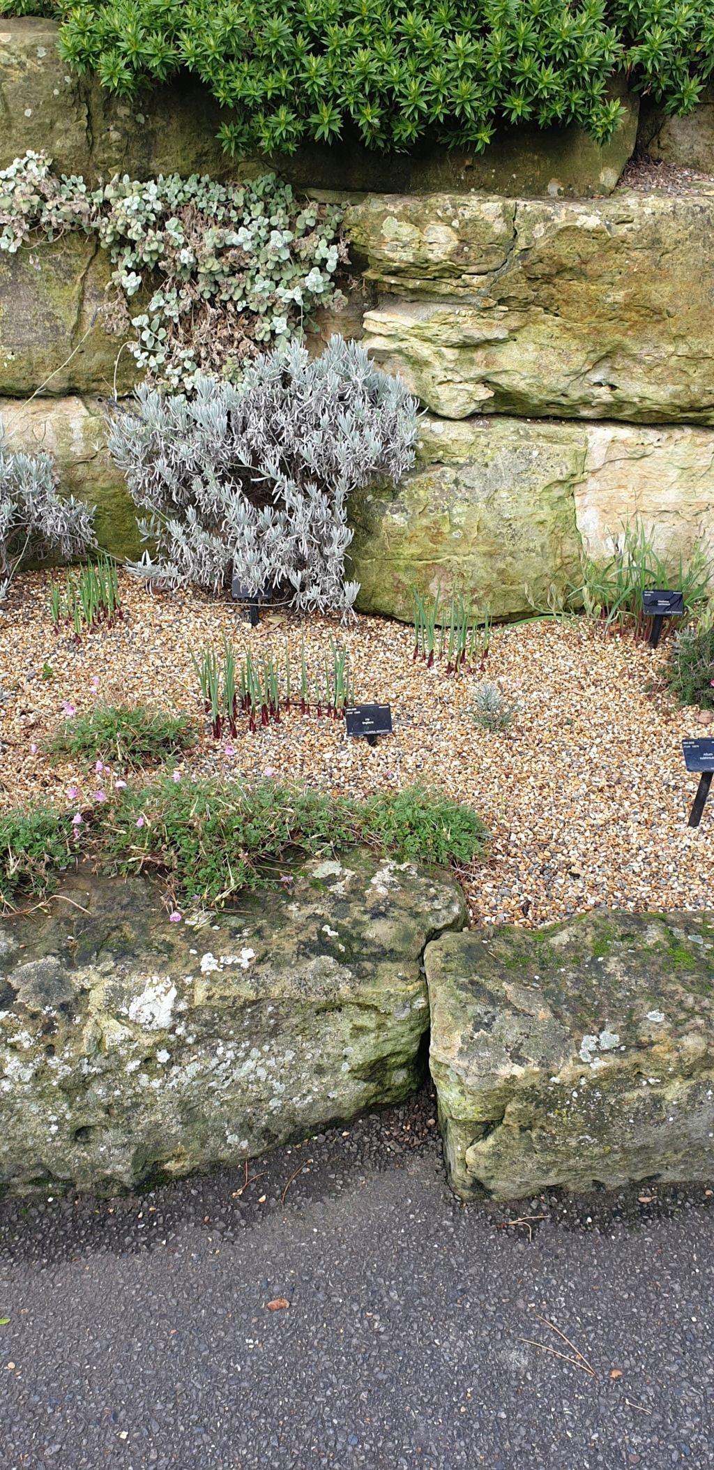 Jardin botanique de Kew UK 312_ti10