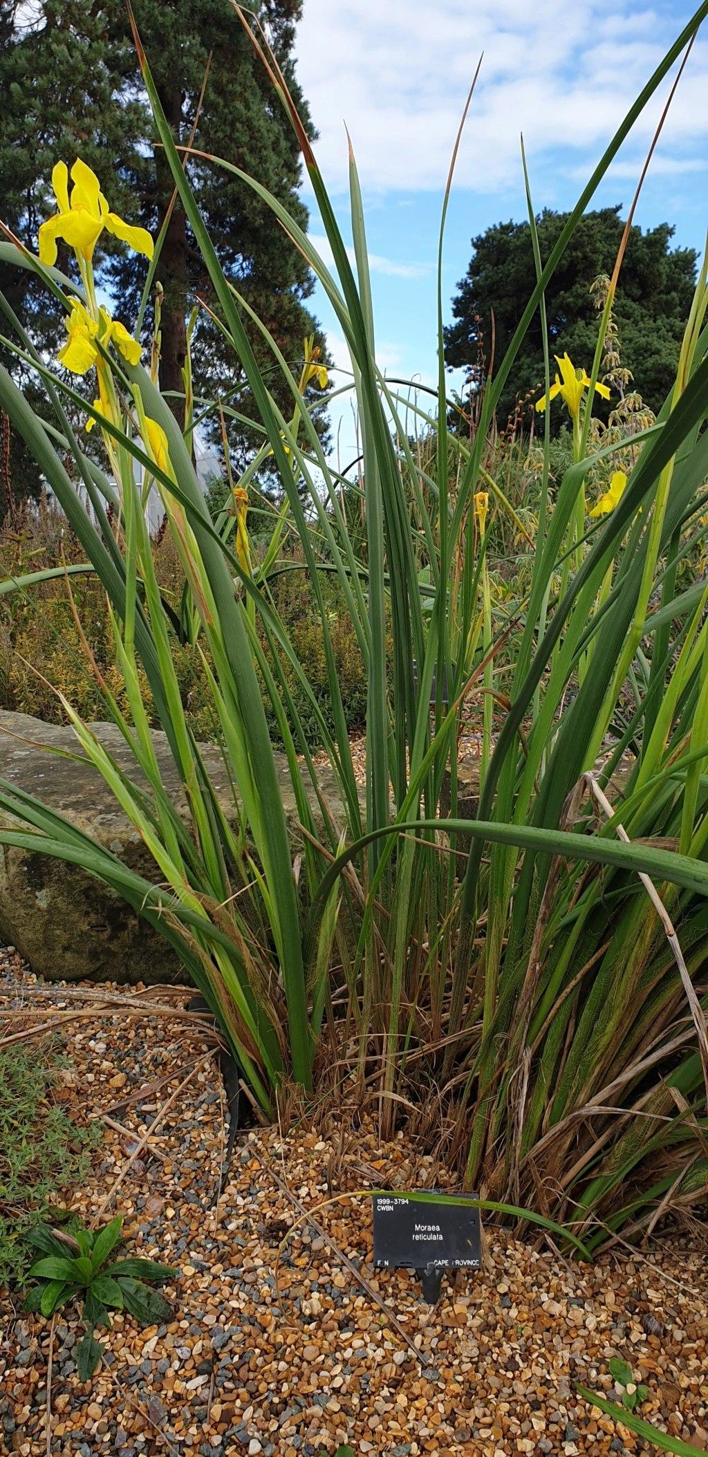 Jardin botanique de Kew UK Morea_10