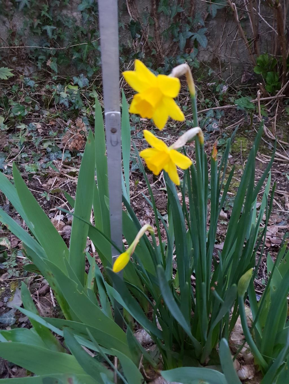 Narcisse 2018 & 2019 Narcis16
