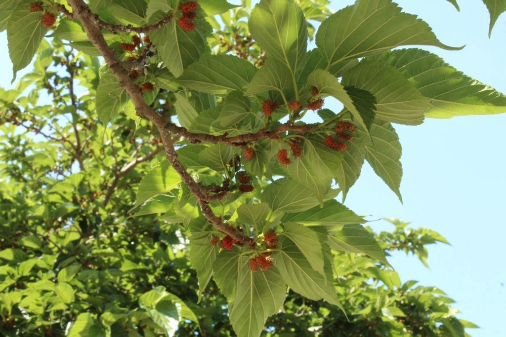 [Fil ouvert] Fruit sur l'arbre - Page 9 110