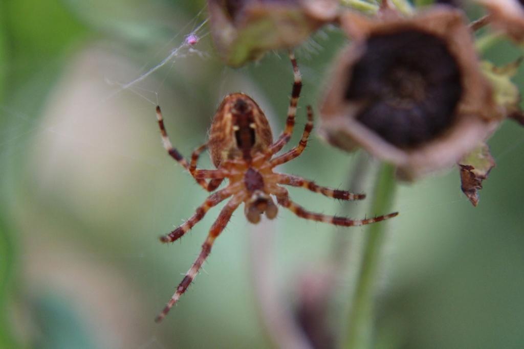 (FIL OUVERT à tous) vous aimez les araignées? - Page 7 1121