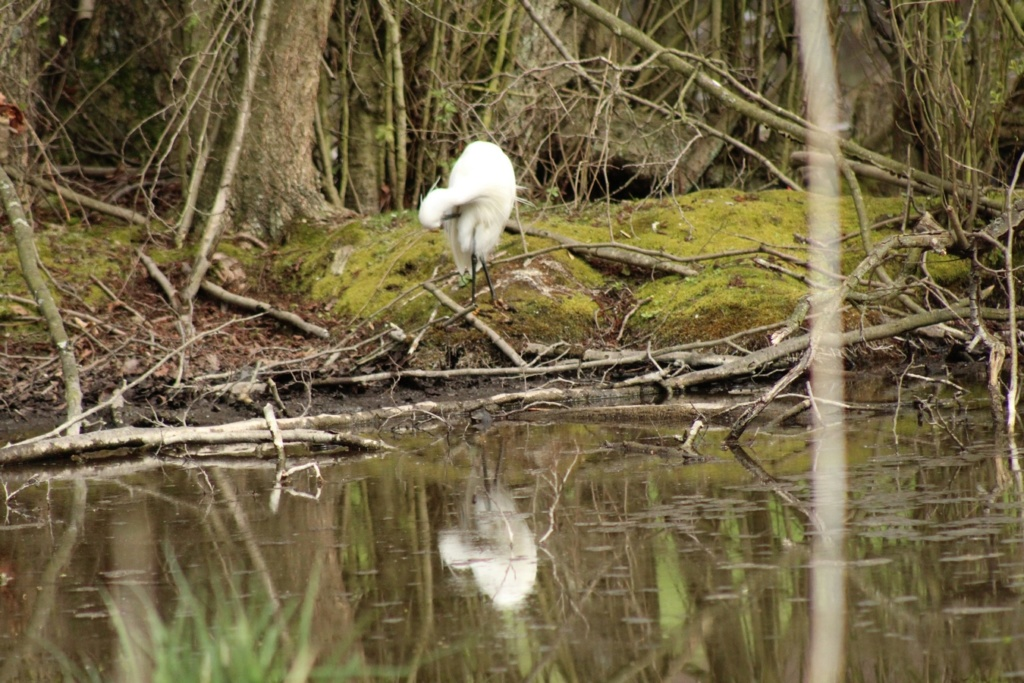 [Ouvert] FIL - Oiseaux. - Page 28 13210
