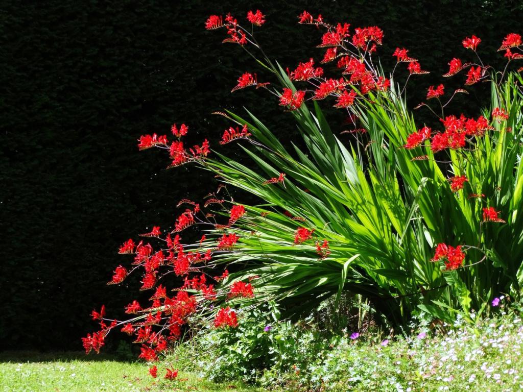 Thème du mois d'octobre 2019 :   Fleurs et jardins  13510