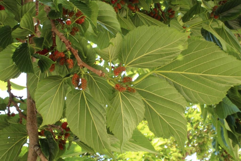 [Fil ouvert] Fruit sur l'arbre - Page 9 210