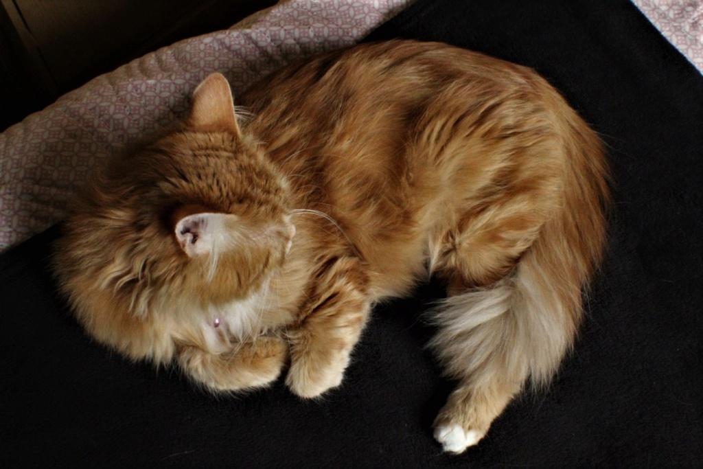 [fil ouvert] Les chats  - Page 9 21510
