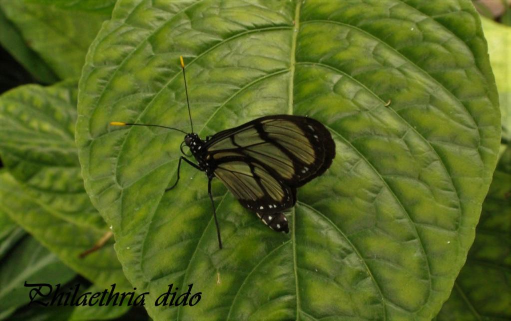 Fil ouvert - Proxi - Papillons - Page 11 4513