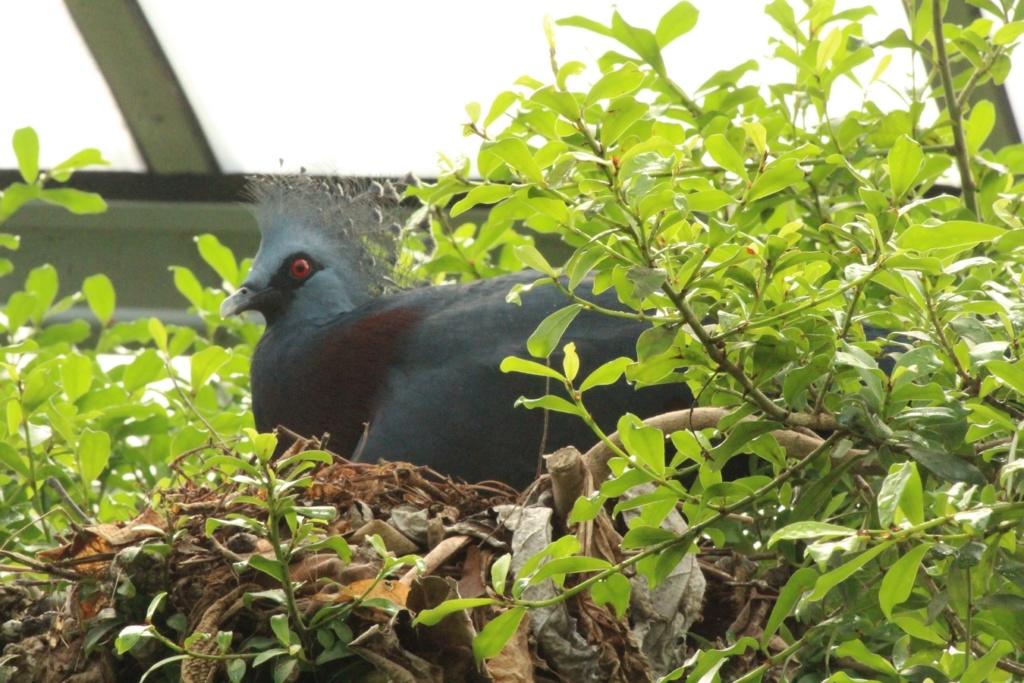 [Ouvert] FIL - Oiseaux. - Page 32 Img_0026