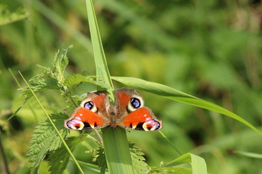 Fil ouvert - Proxi - Papillons - Page 11 Img_0110