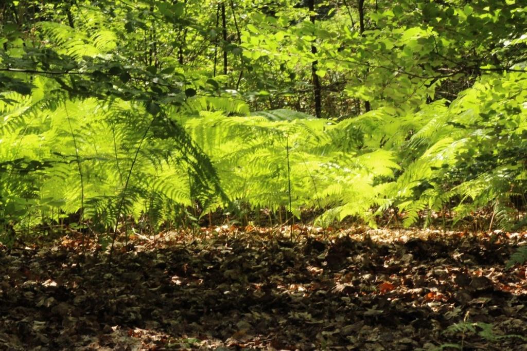 [fil ouvert] la forêt dans tous ses états - Page 19 Img_0117