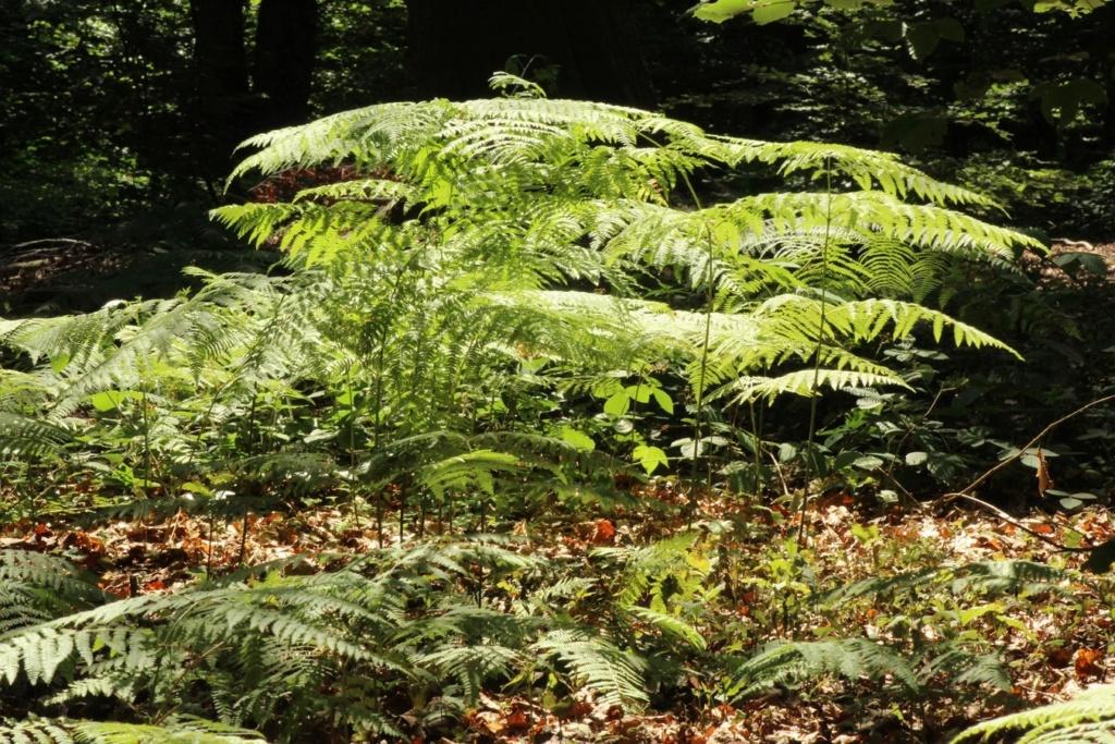 [fil ouvert] la forêt dans tous ses états - Page 19 Img_0119