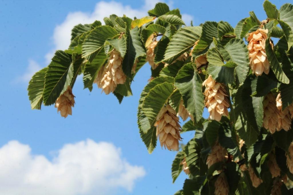 [Fil ouvert] Fruit sur l'arbre - Page 9 Img_0124