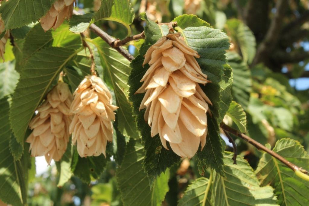 [Fil ouvert] Fruit sur l'arbre - Page 9 Img_0125