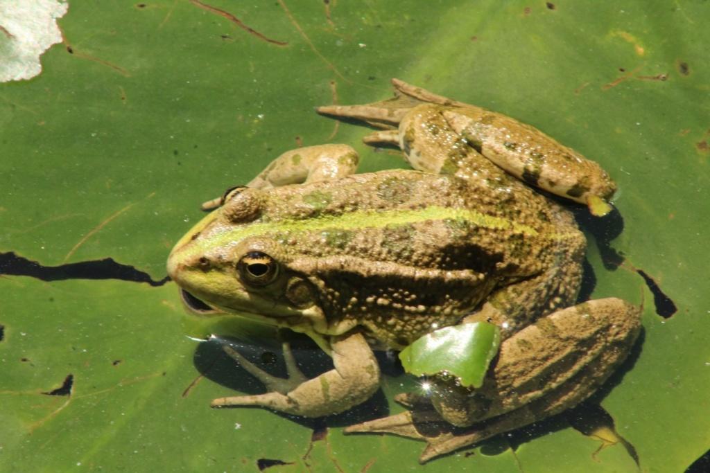 [Fil ouvert à tous] Reptiles, serpents, tortues, amphibiens, ... - Page 10 Img_0436