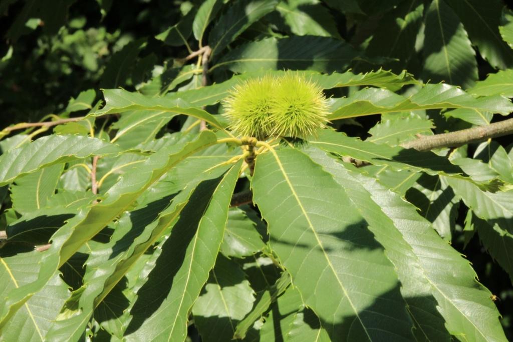 [Fil ouvert] Fruit sur l'arbre - Page 9 Img_0521