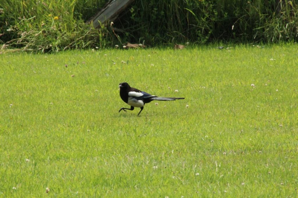 [Ouvert] FIL - Oiseaux. - Page 32 Img_0533
