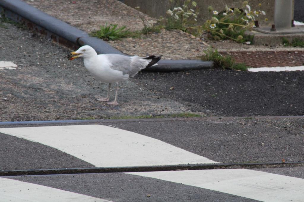 [Ouvert] FIL - Oiseaux. - Page 33 Img_0534