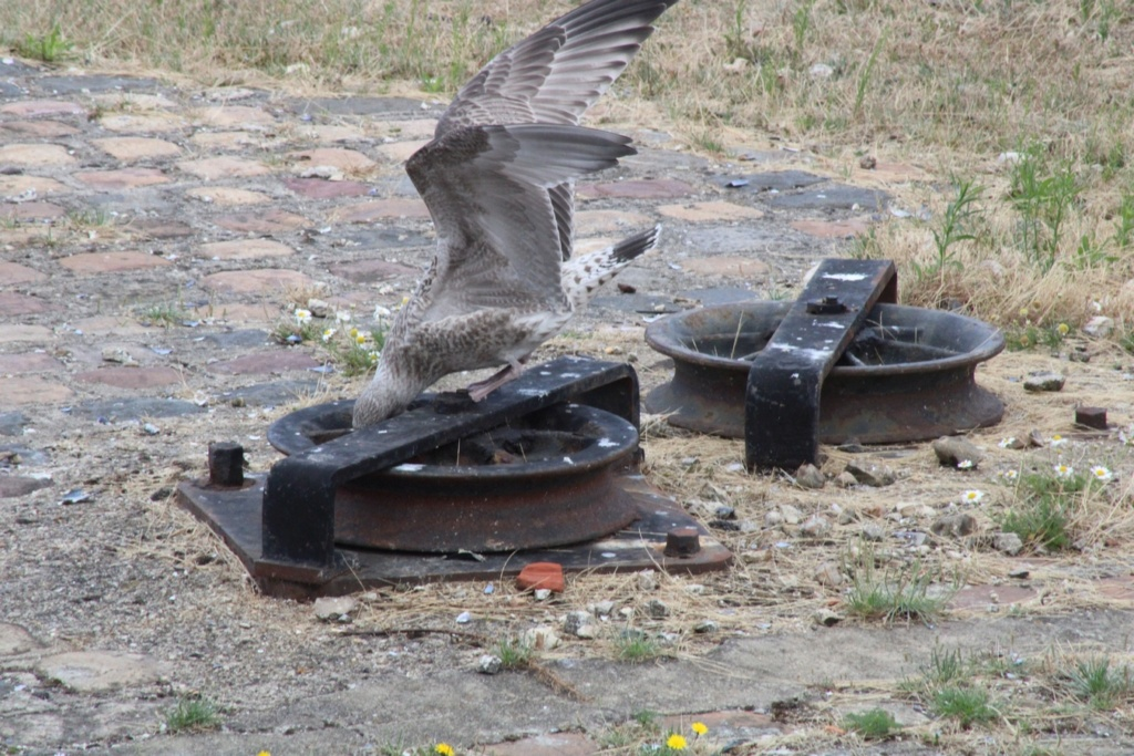 [Ouvert] FIL - Oiseaux. - Page 33 Img_0537
