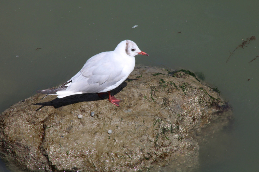 [Ouvert] FIL - Oiseaux. - Page 33 Img_0539