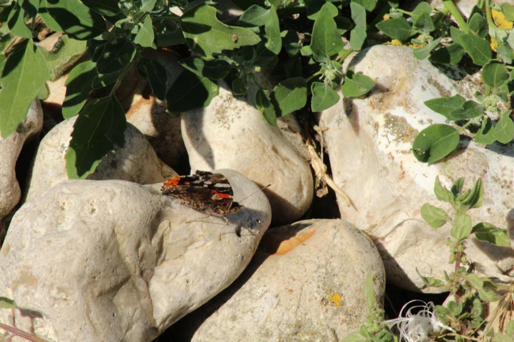 Fil ouvert - Proxi - Papillons - Page 11 Img_0617