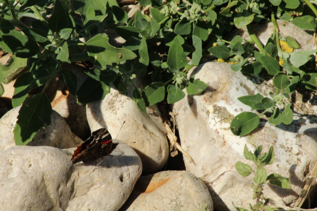 Fil ouvert - Proxi - Papillons - Page 11 Img_0618