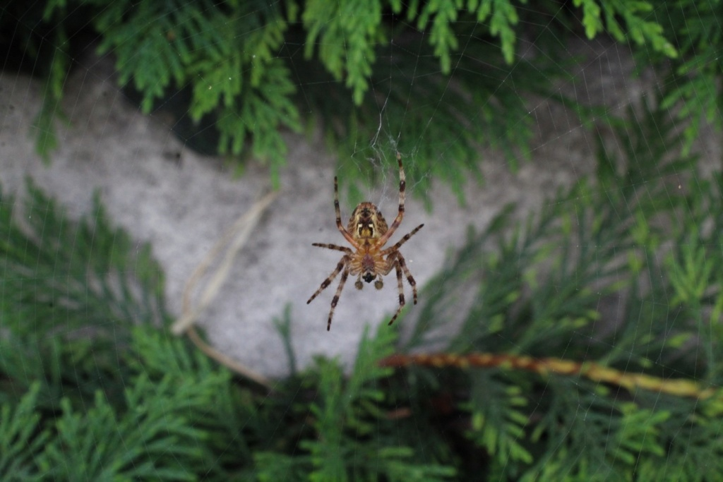 (FIL OUVERT à tous) vous aimez les araignées? - Page 6 Img_0619