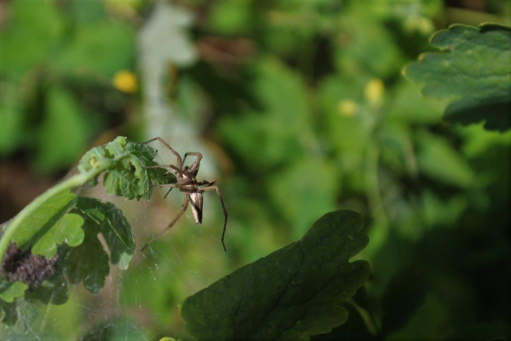 (FIL OUVERT à tous) vous aimez les araignées? - Page 6 Img_0620