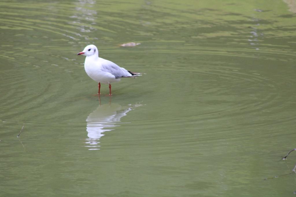 [Ouvert] FIL - Oiseaux. - Page 33 Img_0632