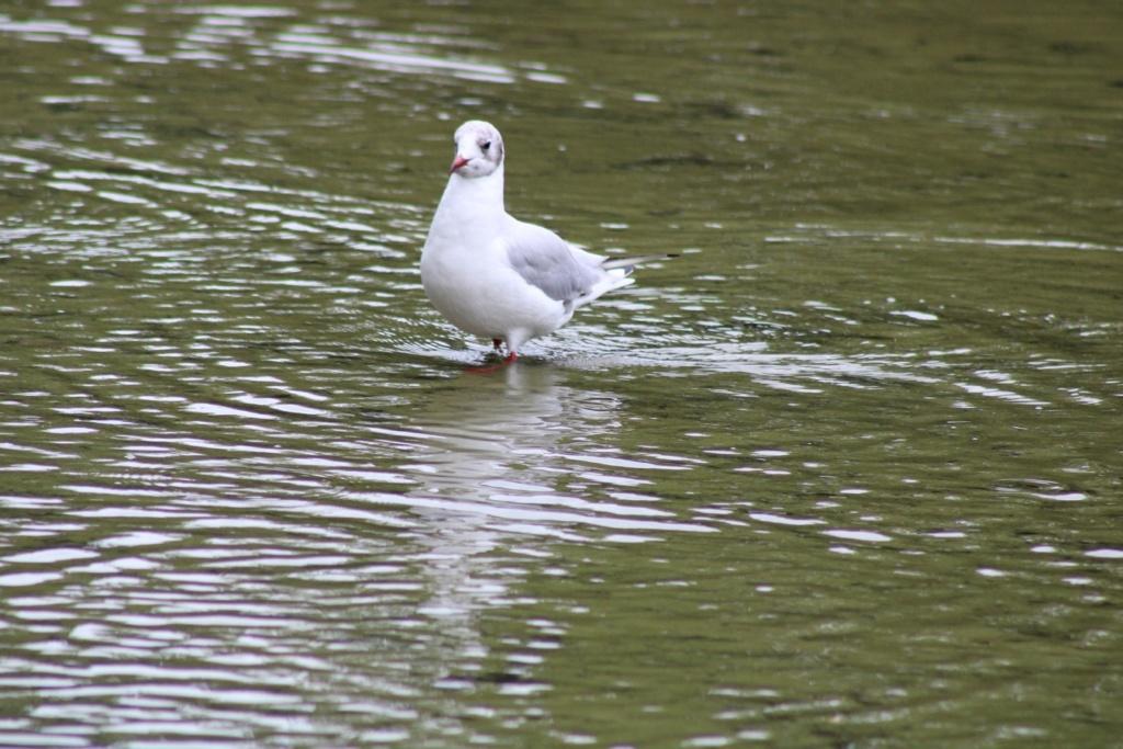 [Ouvert] FIL - Oiseaux. - Page 33 Img_0633