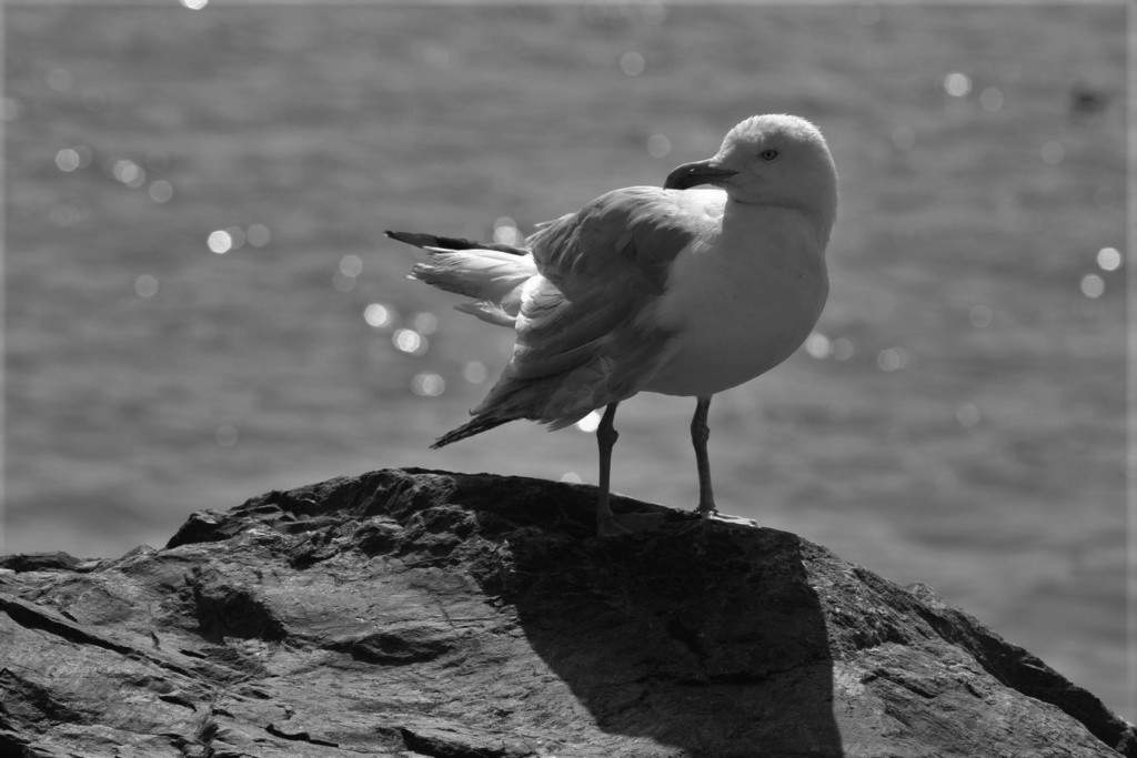 [Ouvert] FIL - Oiseaux. - Page 33 Img_0826