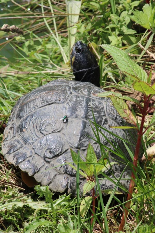 [Fil ouvert à tous] Reptiles, serpents, tortues, amphibiens, ... - Page 11 Img_0844