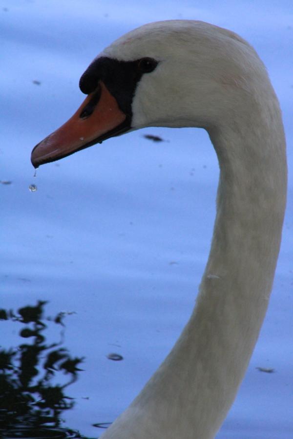 [Ouvert] FIL - Oiseaux. - Page 33 Img_0916