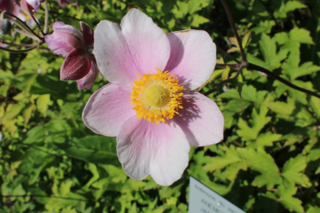 [Fil ouvert] Fleurs et plantes - Page 19 Img_0930