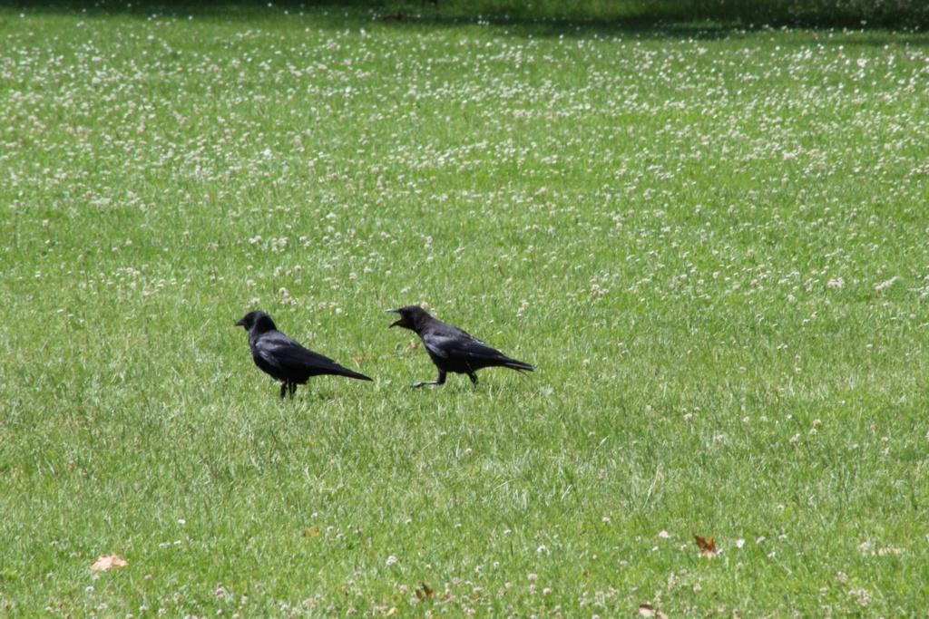 [Ouvert] FIL - Oiseaux. - Page 32 Img_1136