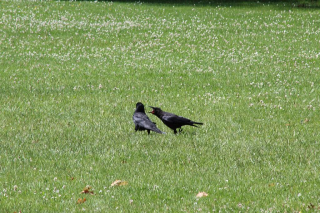 [Ouvert] FIL - Oiseaux. - Page 32 Img_1137