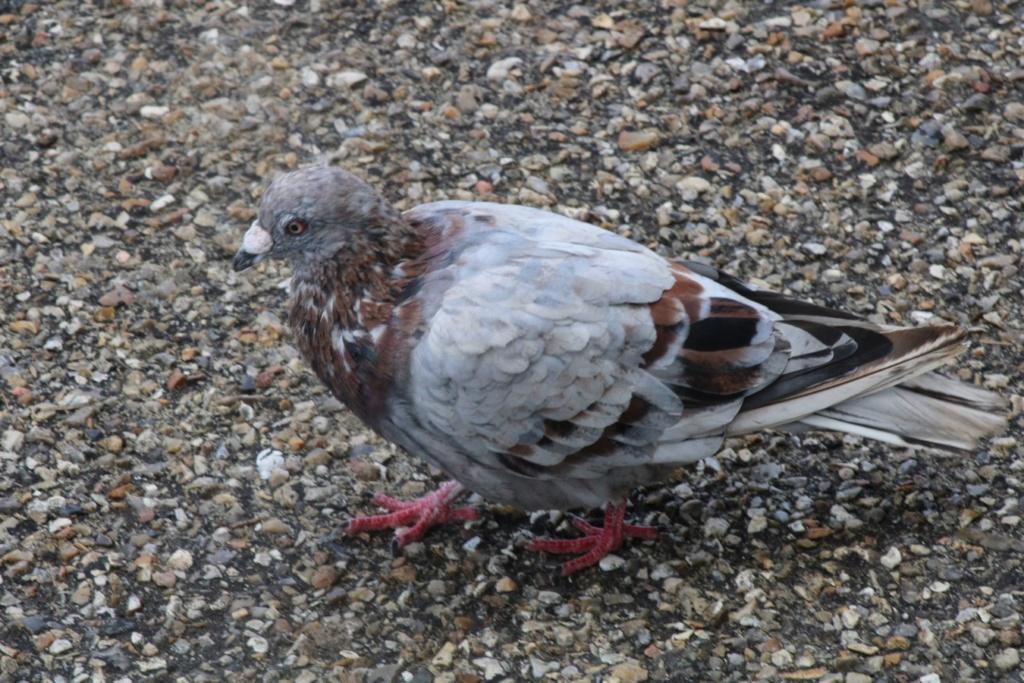 [Ouvert] FIL - Oiseaux. - Page 33 Img_1176