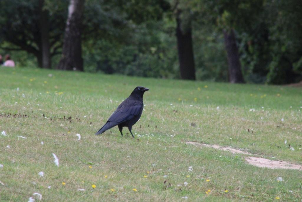 [Ouvert] FIL - Oiseaux. - Page 33 Img_1177