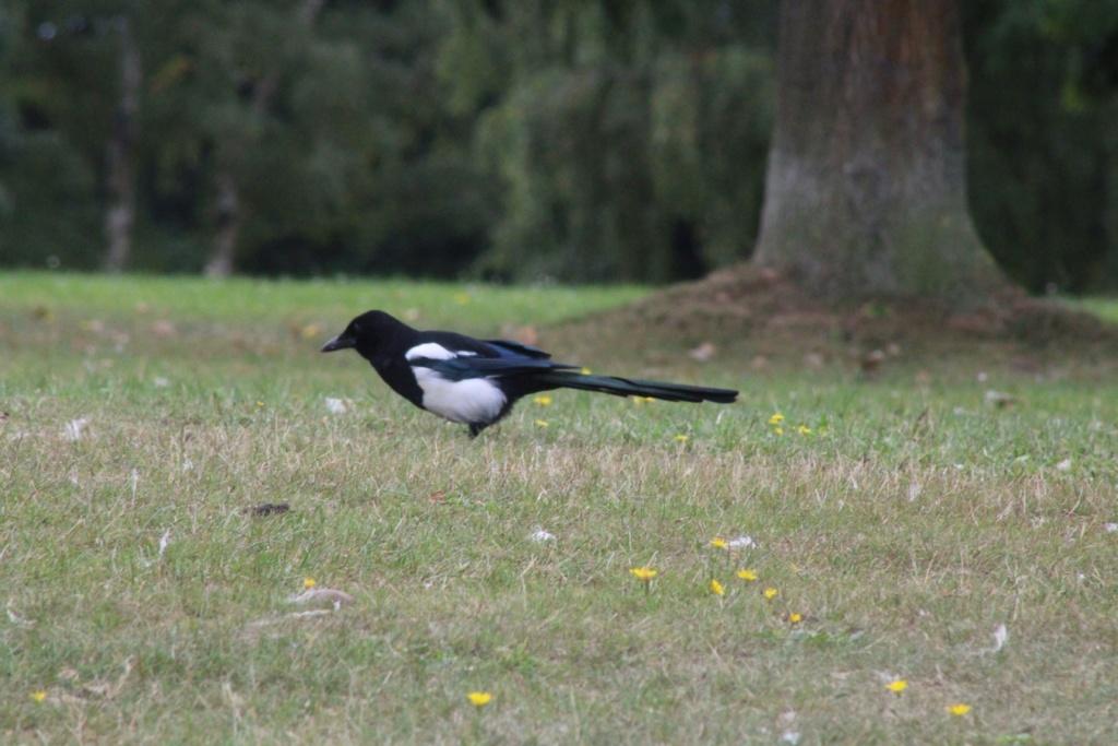 [Ouvert] FIL - Oiseaux. - Page 33 Img_1178