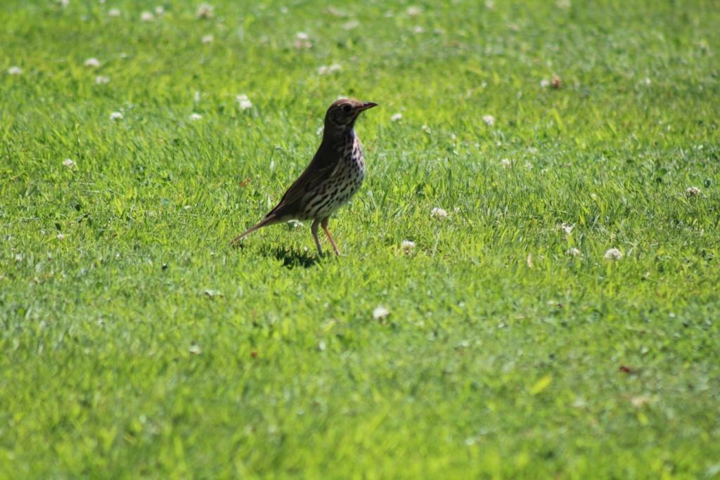 [Ouvert] FIL - Oiseaux. - Page 32 Img_1221