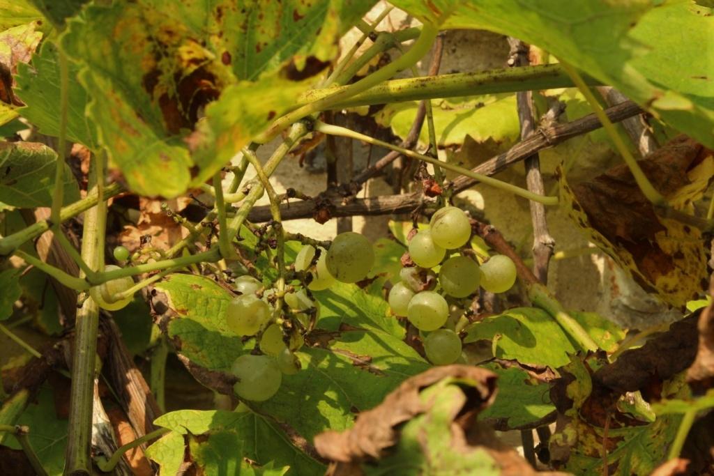 [Fil ouvert] Fruit sur l'arbre - Page 10 Img_1414