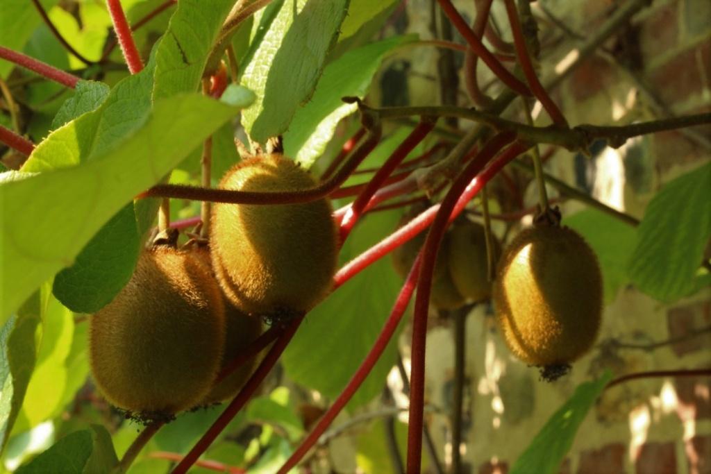[Fil ouvert] Fruit sur l'arbre - Page 10 Img_1416