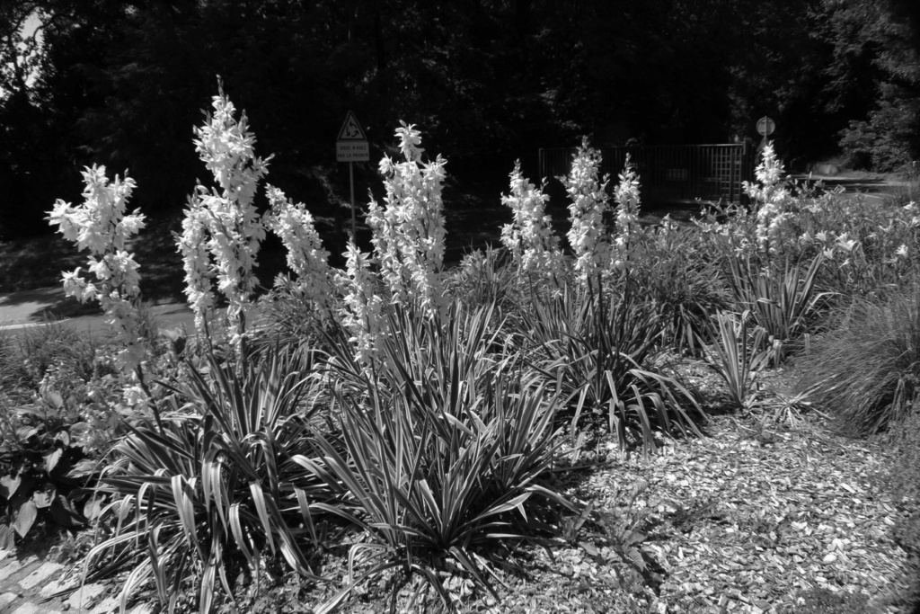[Fil ouvert] Fleurs et plantes - Page 19 Img_1737