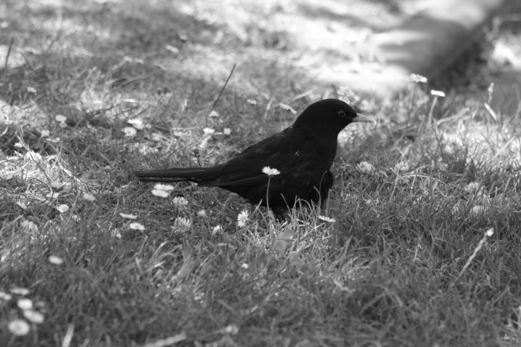 [Ouvert] FIL - Oiseaux. - Page 33 Img_1739