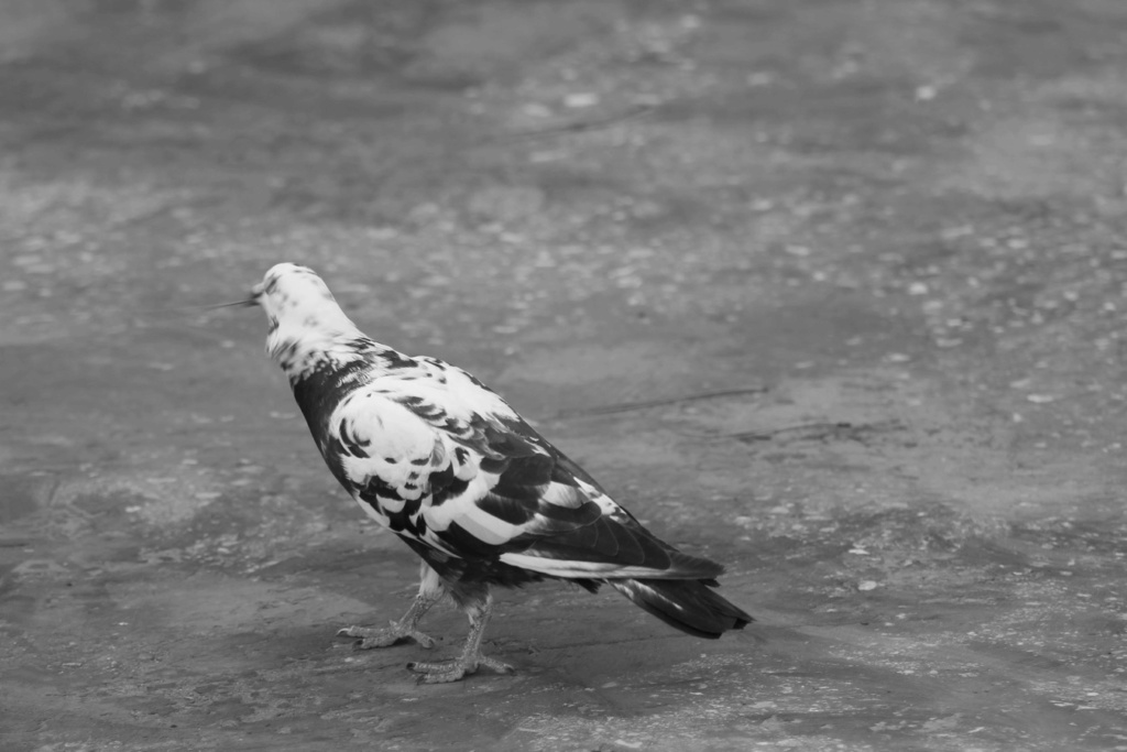 [Ouvert] FIL - Oiseaux. - Page 33 Img_1868