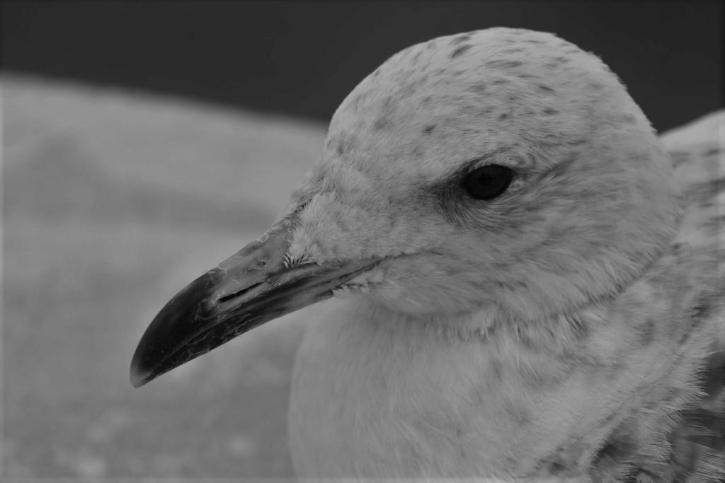 [Ouvert] FIL - Oiseaux. - Page 33 Img_1869