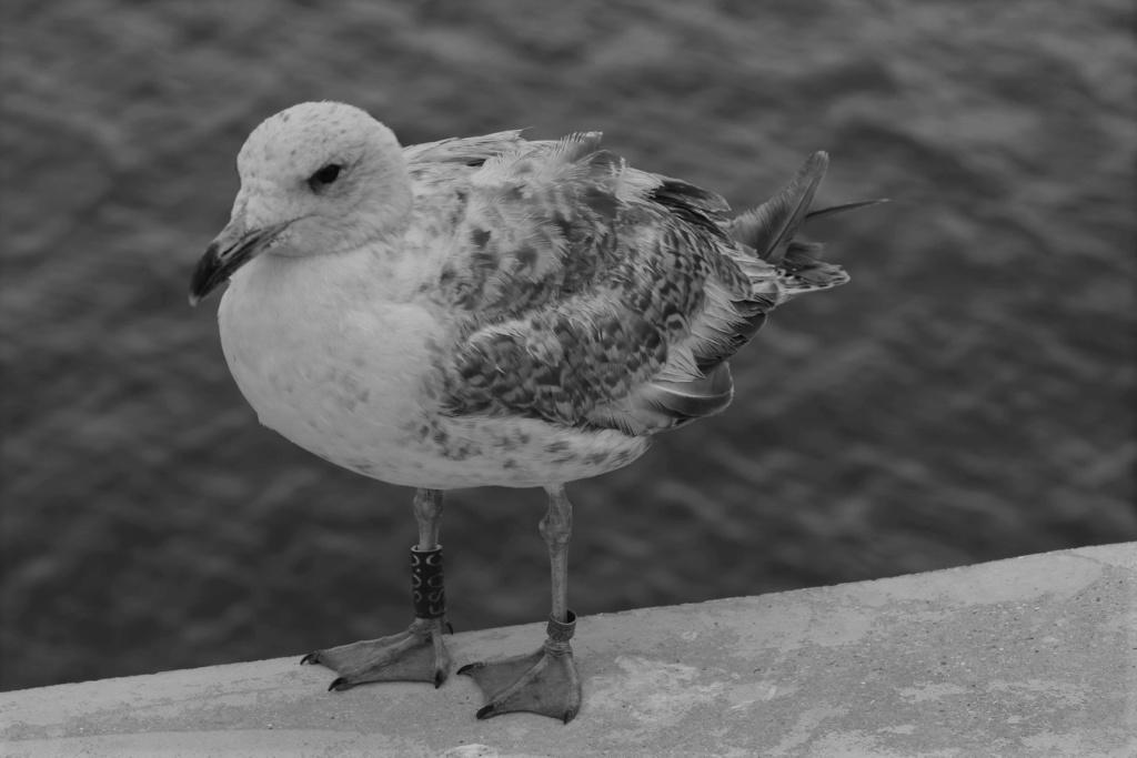 [Ouvert] FIL - Oiseaux. - Page 33 Img_1870