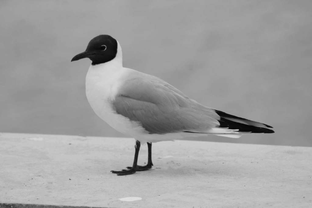 [Ouvert] FIL - Oiseaux. - Page 33 Img_1871