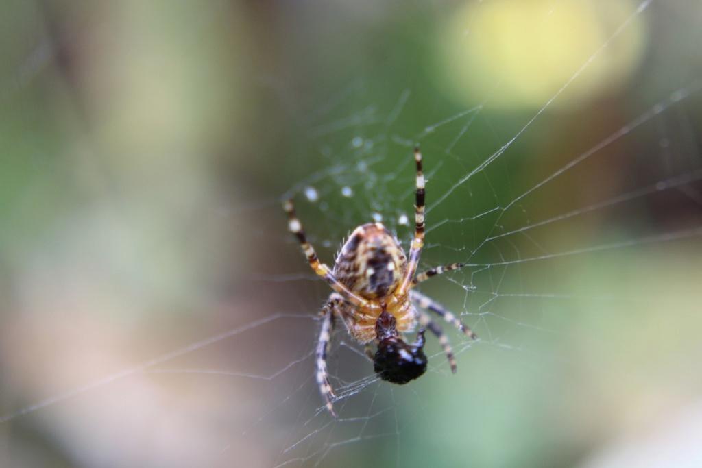 (FIL OUVERT à tous) vous aimez les araignées? - Page 7 Img_1884