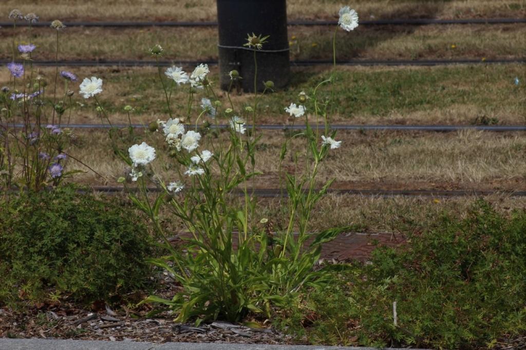 [Fil ouvert] Fleurs et plantes - Page 19 Img_1933