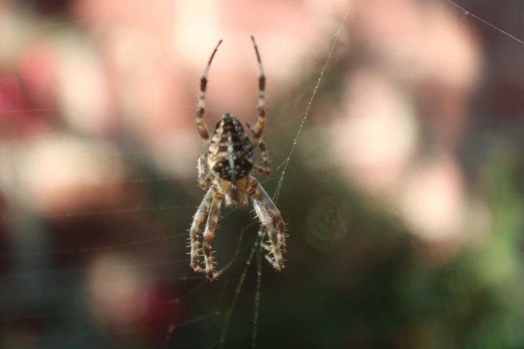 (FIL OUVERT à tous) vous aimez les araignées? - Page 7 Img_2043