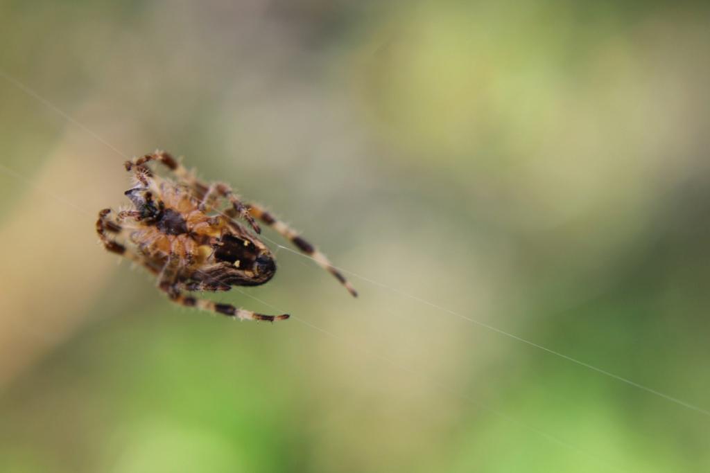 (FIL OUVERT à tous) vous aimez les araignées? - Page 7 Img_2460